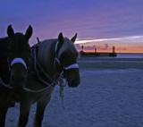 Working_Horses
